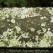 Lichen on the handrail