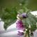 Ladybug and purple flower